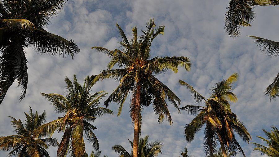 palmenhaine