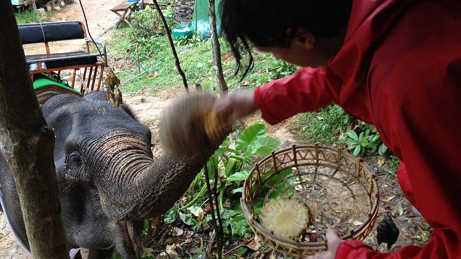elefanten-fuettern-markus
