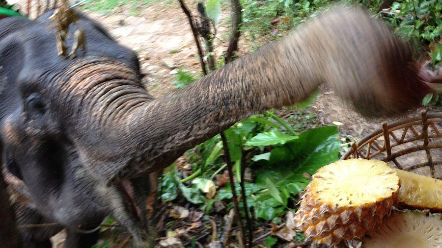 elefanten-fuettern