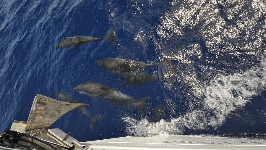 delfine-korfu