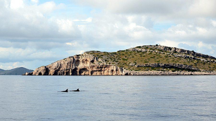 delfine-kornaten