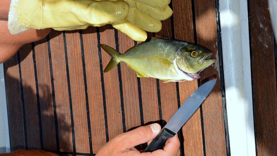 fisch-ausnehmen