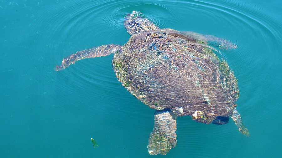 schildkroeten-argostoli-fischerhafen