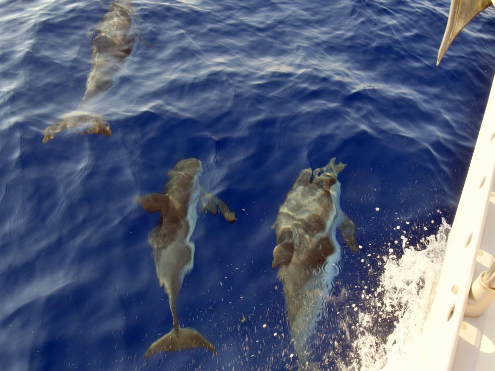 delfinschule-peloponnes