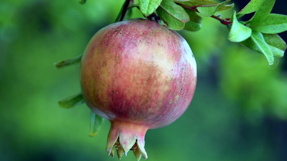 porto-kagio-granatapfel