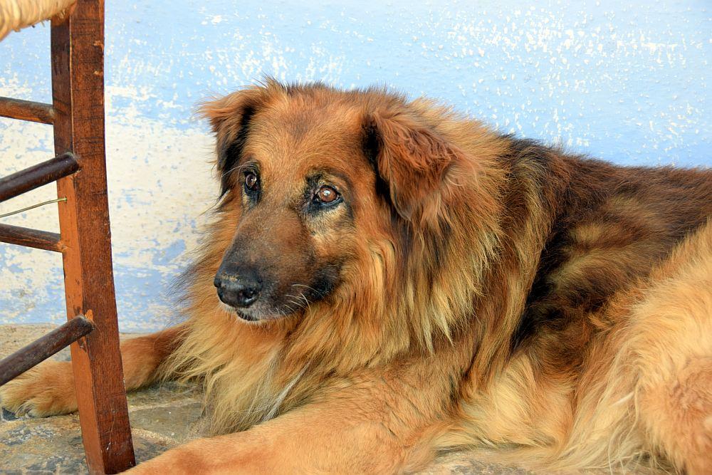 hydra-kloster-hund